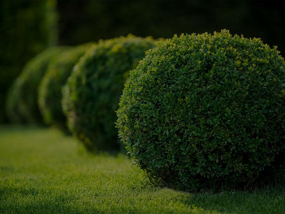 Jesup Landscaping